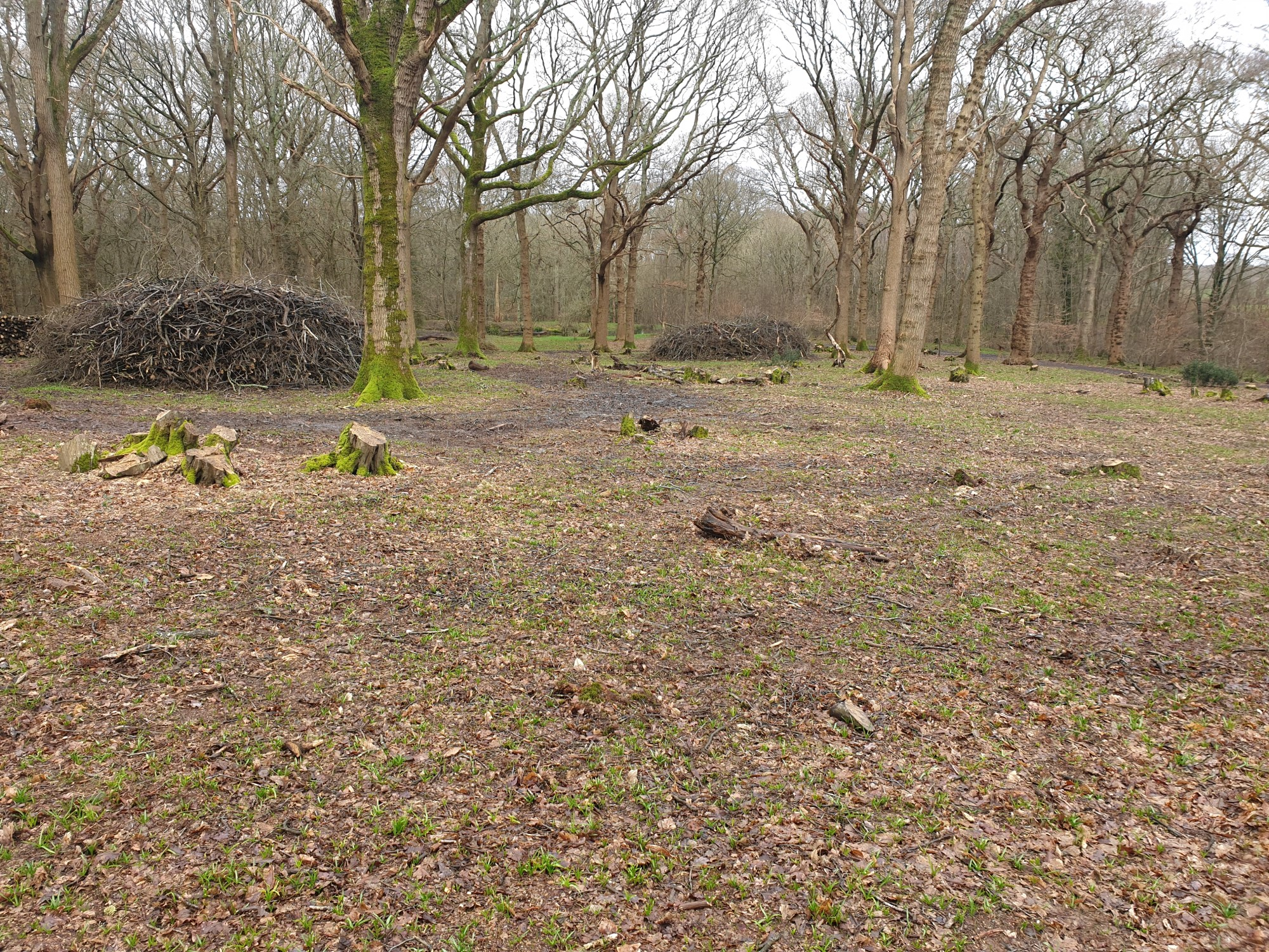 Wildlife mounds